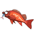 cartoon red grouper fish eating vector image vector image
