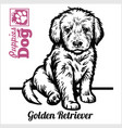 golden retriever puppy sitting drawing hand vector image vector image