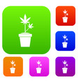 hemp in pot set collection vector image vector image