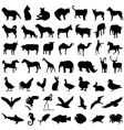 50 animal vector image vector image