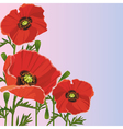 Background with flower red poppy vector image