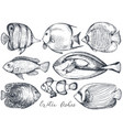 collection hand drawn exotic fishes vector image