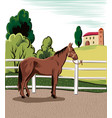 horse tied to the fence of a farm vector image vector image