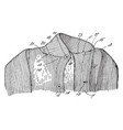 part of a garment vintage engraving vector image vector image