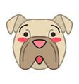 bulldog cute kawaii character vector image