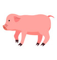 cartoon cute pig isolated on white background vector image vector image