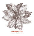 christmas floral decoration poinsettia flower vector image