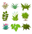 colorful house plants isolated on white background vector image vector image