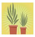 plants pot cartoon vector image