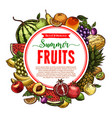 sketch fruit store poster of farm fruits vector image vector image