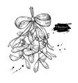 Mistletoe with bow and ribbon Christmas decor vector image