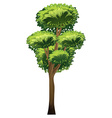 A tall tree vector image vector image