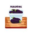aubergine flat design vector image vector image