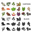 herb and spices cartoon icons in set collection vector image vector image
