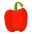 isolated red pepper vector image vector image
