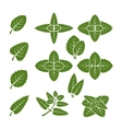 Mint leaves set vector image