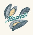 mussels badge or logo in vintage retro style vector image