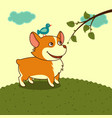 welsh corgi dog in the meadow in yellow sky vector image vector image