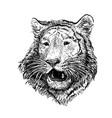 2022 year tiger 5