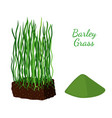 barley grass wheat cartoon flat style vector image vector image
