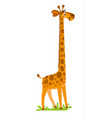 funny smiling giraffe vector image vector image