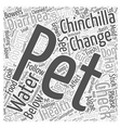 How To Cure Some Health Problems of Your Pet vector image vector image