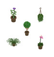 isometric houseplant set of tree flower blossom vector image