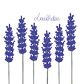 lavender background vector image
