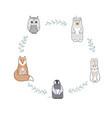 round shape frame with cute bafox bear owl vector image