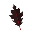 dark dry oak leaf graphic vector image