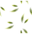 fresh green tea leaves seamless pattern on white vector image