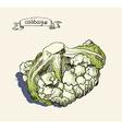 artistic cabbage sketch vector image vector image