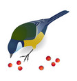 cute bird titmouse pecks rowan berries vector image vector image
