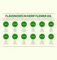 flavonoids in hemp flower oil horizontal vector image vector image