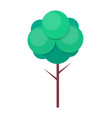 green tree with thin trunk and leaves vector image