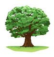 magic oak tree isolated vector image vector image