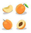 whole ripe fruit apricot with green stem leaf vector image vector image