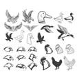 set of birds eagle duck goose chicken design vector image