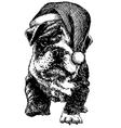Christmas puppy bulldog vector image vector image