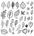 doodle fantasy leaves on white background vector image vector image