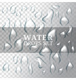 realistic drops of water with liquid vector image