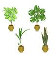 tropical plants in pot schefflera philodendron vector image