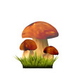 edible mushrooms on grass vector image vector image