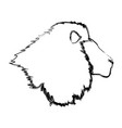 head big lion african powerful fierce vector image
