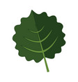 orbicular floral leaves graphic vector image vector image