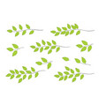 tree branches with green leaves vector image vector image