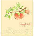 apple tree postcard vector image
