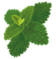 art with nettle vector image vector image