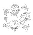 rose set liner on white vector image vector image