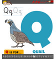 letter q from alphabet with quail bird animal vector image